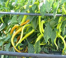 Семена горького перца Спираль F1 \ Spiral F1 500 семян ZKI Lark Seeds