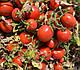 Семена томата 2206 F1 100.000 семян  Heinz Seed, фото 5
