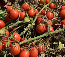 Семена томата 2206 F1 500 семян Heinz Seed