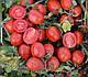 Семена томата 1015 F1 100.000 семян Heinz Seed, фото 2