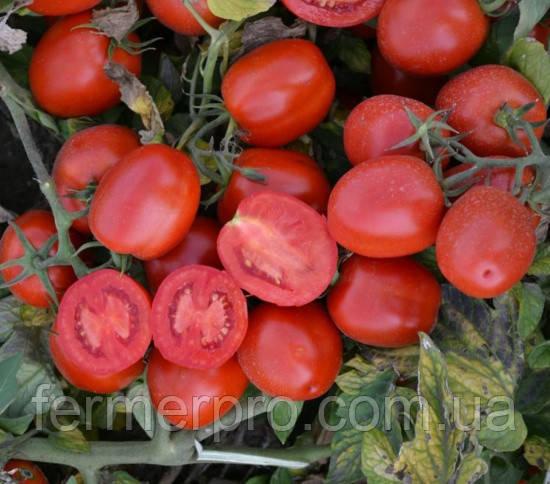 Семена томата 1015 F1 100.000 семян Heinz Seed