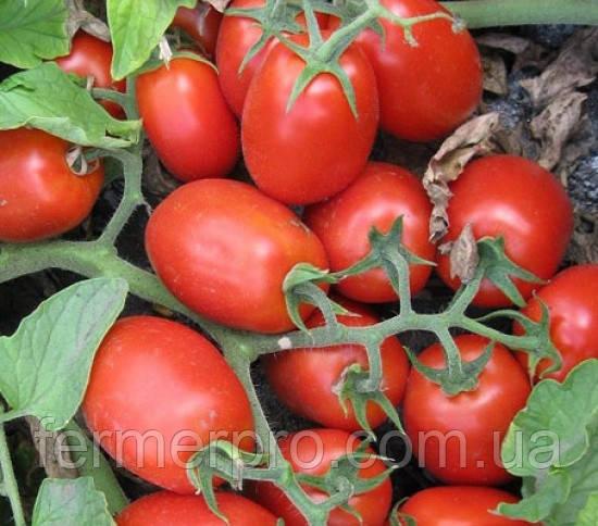 Семена томата 3402 F1 100.000 семян от Heinz Seed