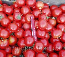 Семена ультрараннего томата Шаста F1 1000 семян от Lark Seeds