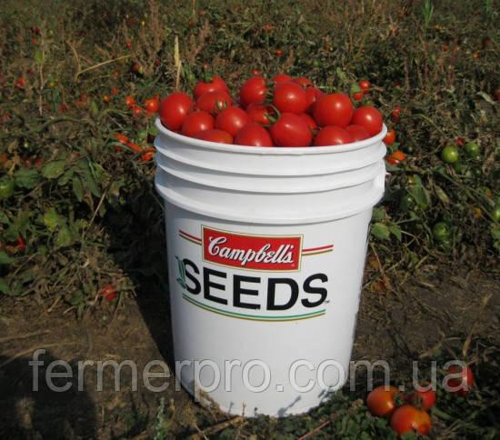 Семена томата Боцман F1 \ Bocman F1 10000 семян Lark Seeds