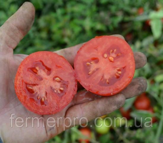 Семена томата Грандо F1 \ Grando F1 5000 семян Lark Seeds