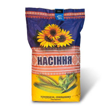 Семена Подсолнечника Чародей От Производителя, фото 2