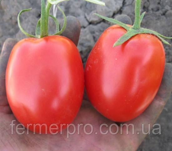 Семена томата Санни F1 \ Sanni F1 5000 семян  Lark Seeds