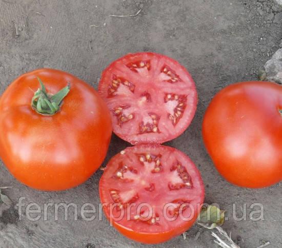 Семена томата 1502 F1 500 семян Lars Seeds