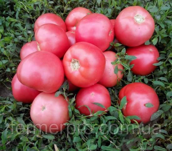 Семена томата розового Пинк Свитнес F1 5000 семян Lark Seeds