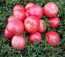 Семена томата розового Пинк Свитнес F1 500 семян Lark Seeds
