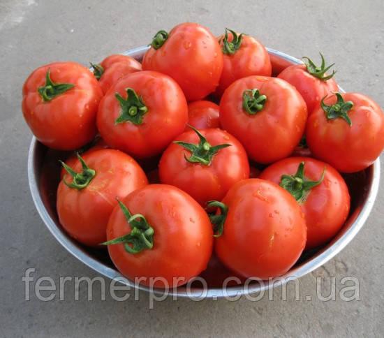 Семена томата Корал \ Koral 250 грамм Lark Seeds