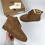 Мужские зимние ботинки UGG Australia Neumel Chestnut. Живое фото. Премиум реплика, фото 6