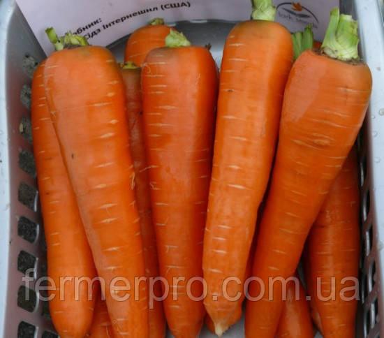 Семена моркови Курода 0.5 кг Lark Seeds