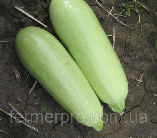 Семена кабачка Теренум F1 500 семян Lark Seeds