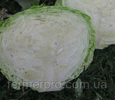 Семена капусты Оригами F1 1000 семян Lark Seeds