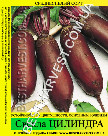 Семена свеклы Цилиндра 0.5 кг