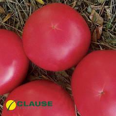 Семена томата Фенда F1 (Clause) 250 семян — ранний (60-65 дней), РОЗОВЫЙ, круглый, индетерминантный.