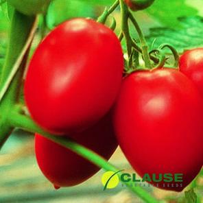 Колибри F1 (Clause) 250 семян — томат ранний, индетерминантный., фото 2
