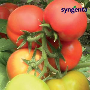 Семена томата Кабинет F1 (Syngenta) 500 семян — ранний (55 дней), красный, полудетерминантный, круглый, фото 2