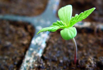 Удобрения, стимуляторы роста, прилипатели — что лучше выбрать