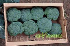 Семена капусты броколли Громовой Купол (TBR 508) F1 2500 семян Takii seeds