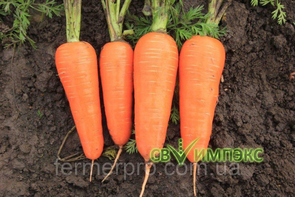 Семена моркови Проминенс F1 100.000 семян TAKI SEEDs