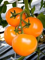 Семена томата Маматаро Голд (TI-169) F1 250 семян Takii seeds
