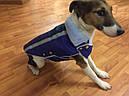 Жилет-попона мех 67 см разм №6 синий для собак, фото 4