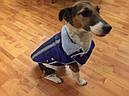 Жилет-попона мех 67 см разм №6 синий для собак, фото 5