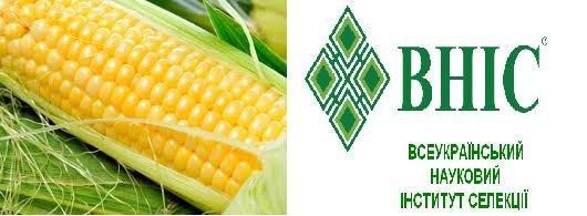 Семена кукурузы ВН 6763 ВНИС (ФАО320)