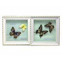 Бабочки в рамке (21х21х3 см) Код:25995