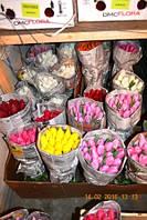 Тюльпаны оптом к 8 марта