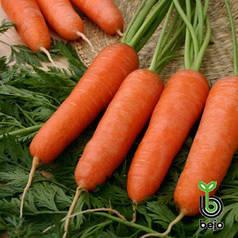 Семена моркови Карини 500 г (Бейо / Bejo) - ранняя сортовая (100 дней), тип Курода