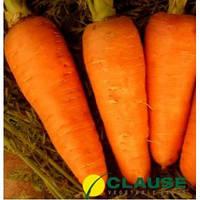 Семена моркови Болтекс (Clause), 0,5 кг — среднепоздняя сортовая (110-120 дней), тип Шантане