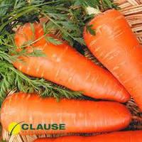 Семена моркови Шантане (Clause) 0,5 кг - среднепоздняя сортовая (110-120 дней), тип Шантане
