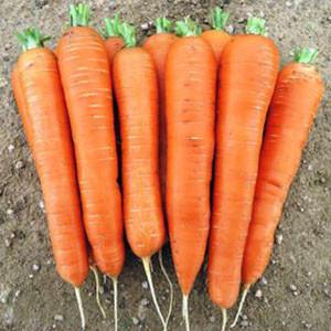 Семена моркови Лагуна F1 (Nunhems) 25000 семян /25 тыс сем — ультра-ранний гибрид (60-65 дней), тип Нантский