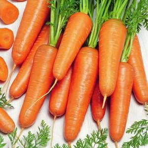 Семена моркови Канада F1 (Бейо / Bejo / САДЫБА ЦЕНТР) 400 семян -среднепоздняя (135 дней), тип Шантане/Данверс