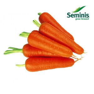 Семена моркови Абако F1 /Seminis, 1 млн. семян /1000000 сем - ранний гибрид, тип Шантане, фр. 1,4-1,6