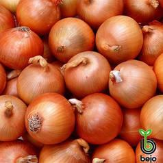 Семена лука Манас F1 (Бейо / Bejo) 250000 семян - среднепоздний (110-115 дней), желтый, круглый, репчатый.