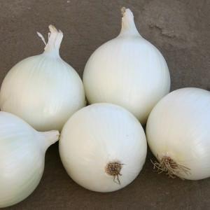 Семена лука Комета F1 (Nunhems) 100000 семян — среднепоздний (115-125 дней), белый, круглый, репчатый.