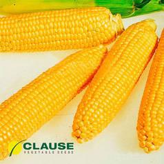 Семена кукурузы Леженд F1 (Clause), 10 кг — ранняя (70 дней), сахарная