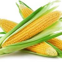 Семена сахарной кукурузы Рання Насолода F1, 2500 семян. Ранняя суперсладкая