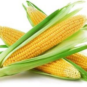 Семена сахарной кукурузы Рання Насолода F1, 2500 семян. Ранняя суперсладкая, фото 2