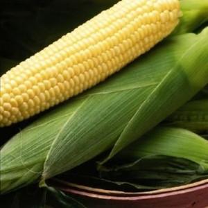 Семена кукурузы Спирит F1, (Syngenta),  на вес кг — ранняя (67 дней), сладкая (147,8 гр за 1000 сем)
