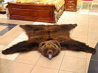 Шкура бурого медведя на подарок профессиональной выделки
