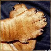 Натуральное, высококачественное средство для защиты и ухода за подушечками лап собак