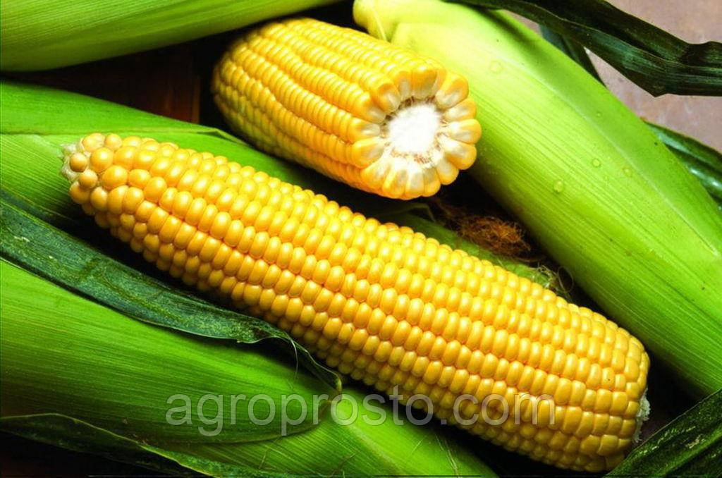 Гибрид кукурузы Элисон (ФАО 290) (Solar seeds) Франция