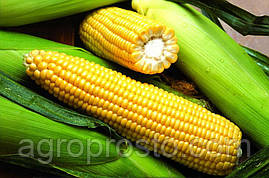 Гибрид кукурузы Ирис (ФАО 320) (Solar seeds) Франция