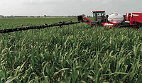 Как приготовить рабочий раствор гербицидов Дисулам и Сульфонил, для обработки посевов кукурузы от сорняков?