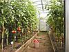 Фермерские теплицы, фото 2